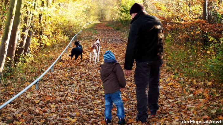 Wie Hund und Hundehalter gemeinsam noch glücklicher werden