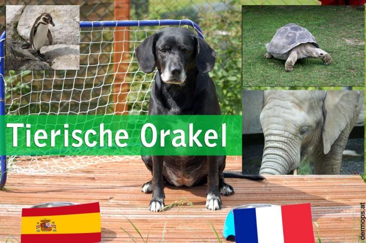 WM-Orakel: Tierische Orakel tippen auf Fußballspiele