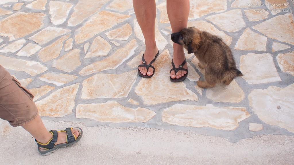 hund-urlaub-liste