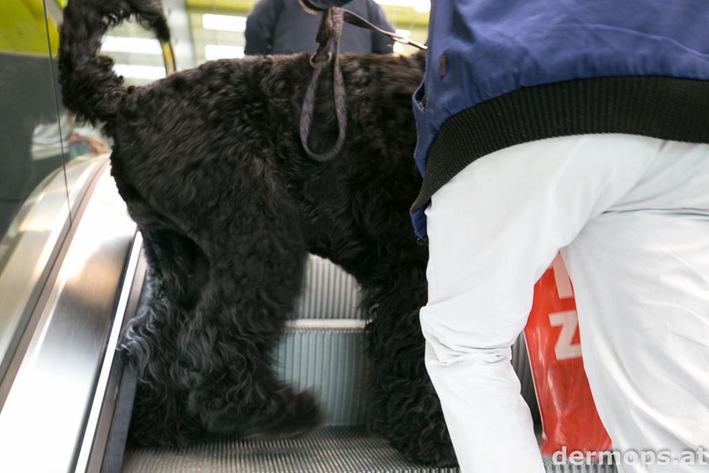 Hund auf der Rolltreppe
