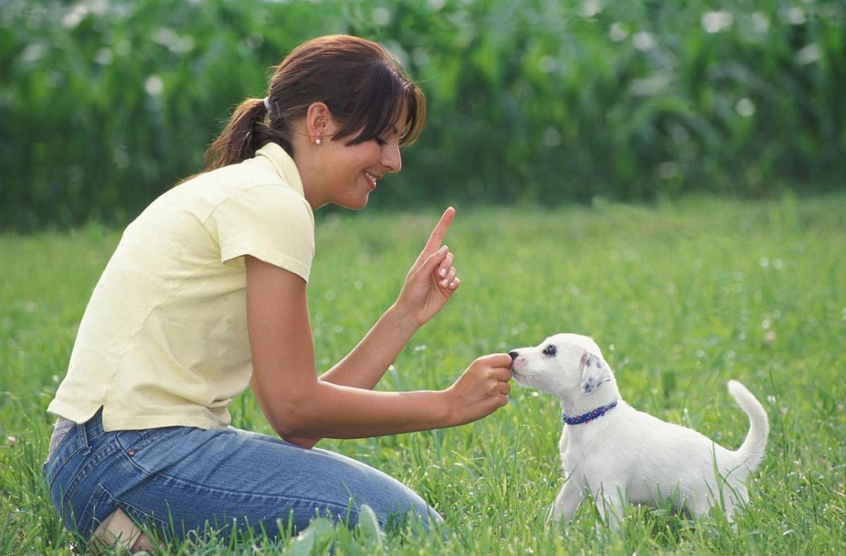 Bedürfnisse von kleinen Hunden beachten