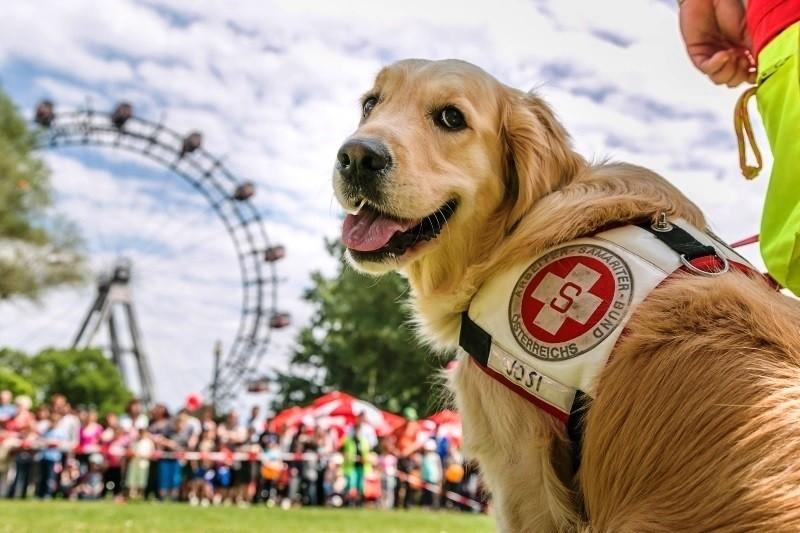 Samariterbund feiert Internationalen Tag des Rettungshundes