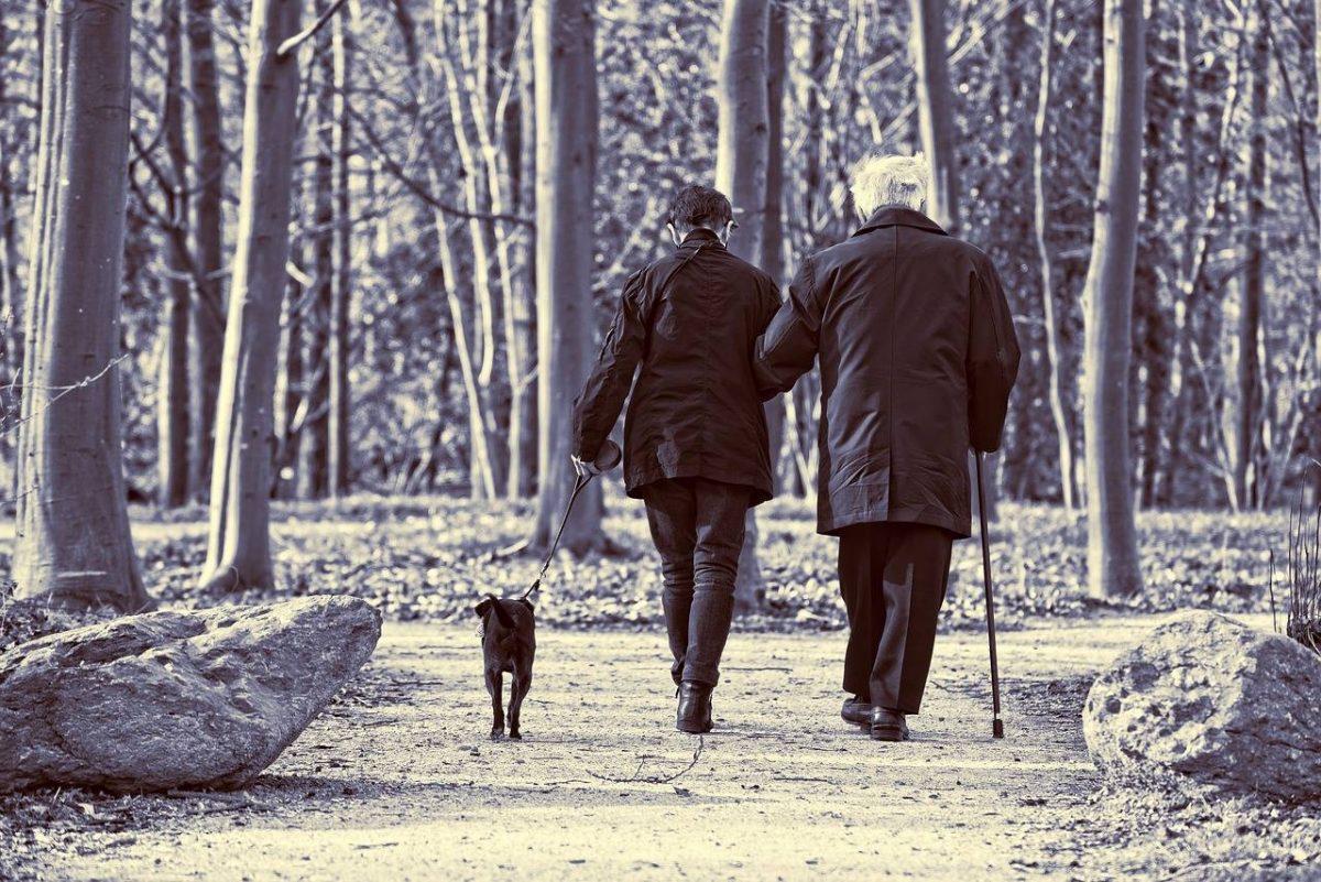 Wie Tiertherapie in Pflege- und Betreuungszentren hilft